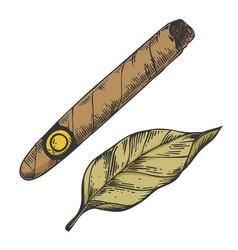 Cigar and tobacco leaf color sketch engraving vector