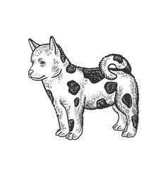 dog puppy sketch vector image