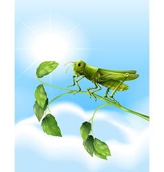 Grasshopper vector