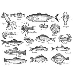 sketch seafood hand drawn fresh sea fishes vector image