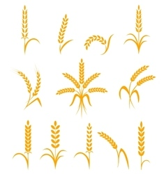 Wheat ears or rice icons set Agricultural symbols vector image vector image