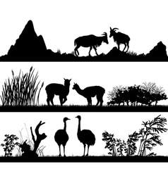 Wild animals goat alpaca ostrich in different habi vector