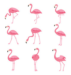 Cartoon pink flamingo set cute flamingos vector
