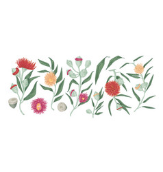 Eucalyptus branches with leaves and flowers vector
