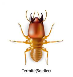 Termites 01 vector