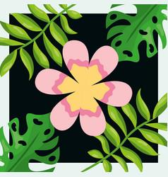 Tropical leaves pink flower palm monstera dark vector