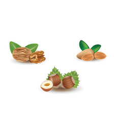 walnut hazelnut and almond vector image