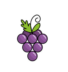 delicious and healthy grape fruit vector image vector image