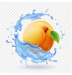 apricot realistic in water splash vector image
