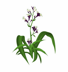 flaxplant vector image vector image