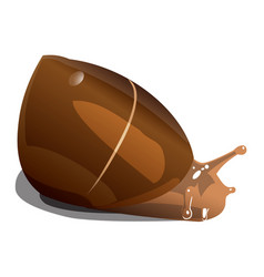 brown river snail on white background isolate vector image
