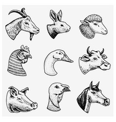 Farm animals head of a domestic horse pig goat vector