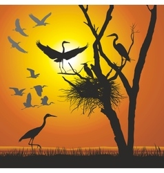 Group herons at sunset vector image