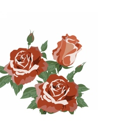 Vintage Watercolor roses vector image