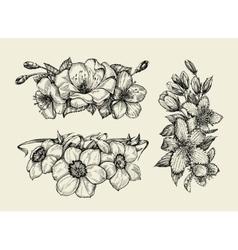 Flower Hand drawn sketch tutsan hypericum vector image vector image
