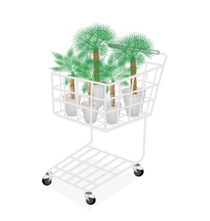 Palm Tree in A Shopping Cart vector image