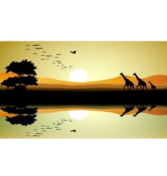 beauty safari of giraffe silhouette vector image vector image