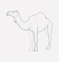 Camel icon line element of vector