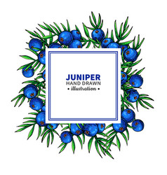 Juniper drawing frame isolated template vector