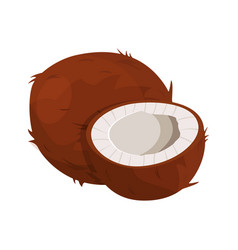 ripe coconuts and half coconut on white vector image