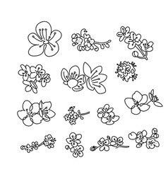 set cherry blossoms flower collection of vector image