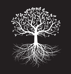 white old tree and roots vector image