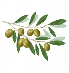olive green vector image