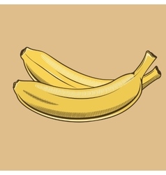 Bananas in vintage style Colored vector image