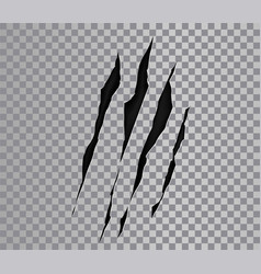 Claw marks a monster or wild beast vector
