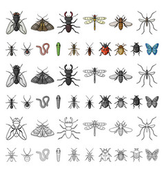 Different kinds of insects cartoon icons in set vector