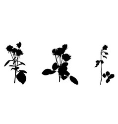 set of beautiful silane white and black roses vector image