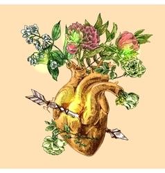 sketch of human heart vector image vector image