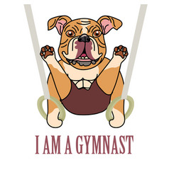 british bulldog athletes exercise with gymnastics vector image