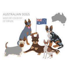 Dogs by country of origin australian dog breeds vector