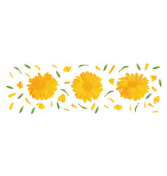 Set marigold flower with green leaf 3d realistic vector