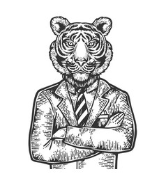 tiger businessman engraving vector image