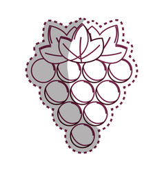 sticker silhouette grapes fruit icon image vector image
