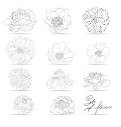 Set of flowers monochrome vector image vector image
