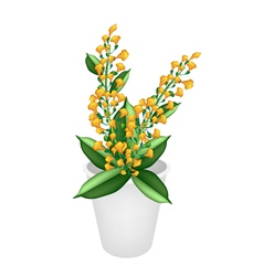 Beautiful Yellow Padauk Flower in A Flower Pot vector image