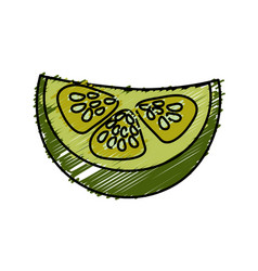 Fresh piece of cucumber organ vegetable vector
