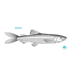 smelt hand-drawn vector image