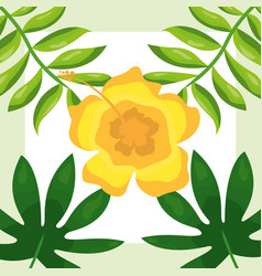 tropical leaves flower branches background vector image