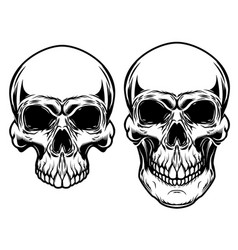 human skulls isolated on white background design vector image vector image