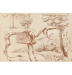 An hand drawn Unicorn vector