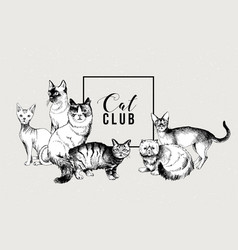 cat club banner vector image