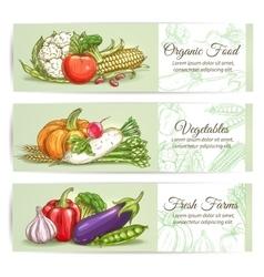 Organic fresh farm vegetables vector image vector image