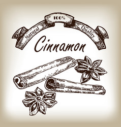 Cinnamon hand drawn in sketch style vector