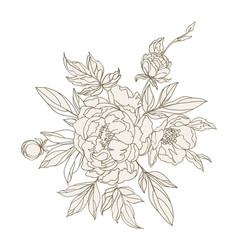 beautiful peonies decoration vector image