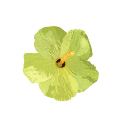 isolated yellow hibiscus tropical plant vector image