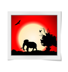 Photo frame with red sunset in the jungle with vector
